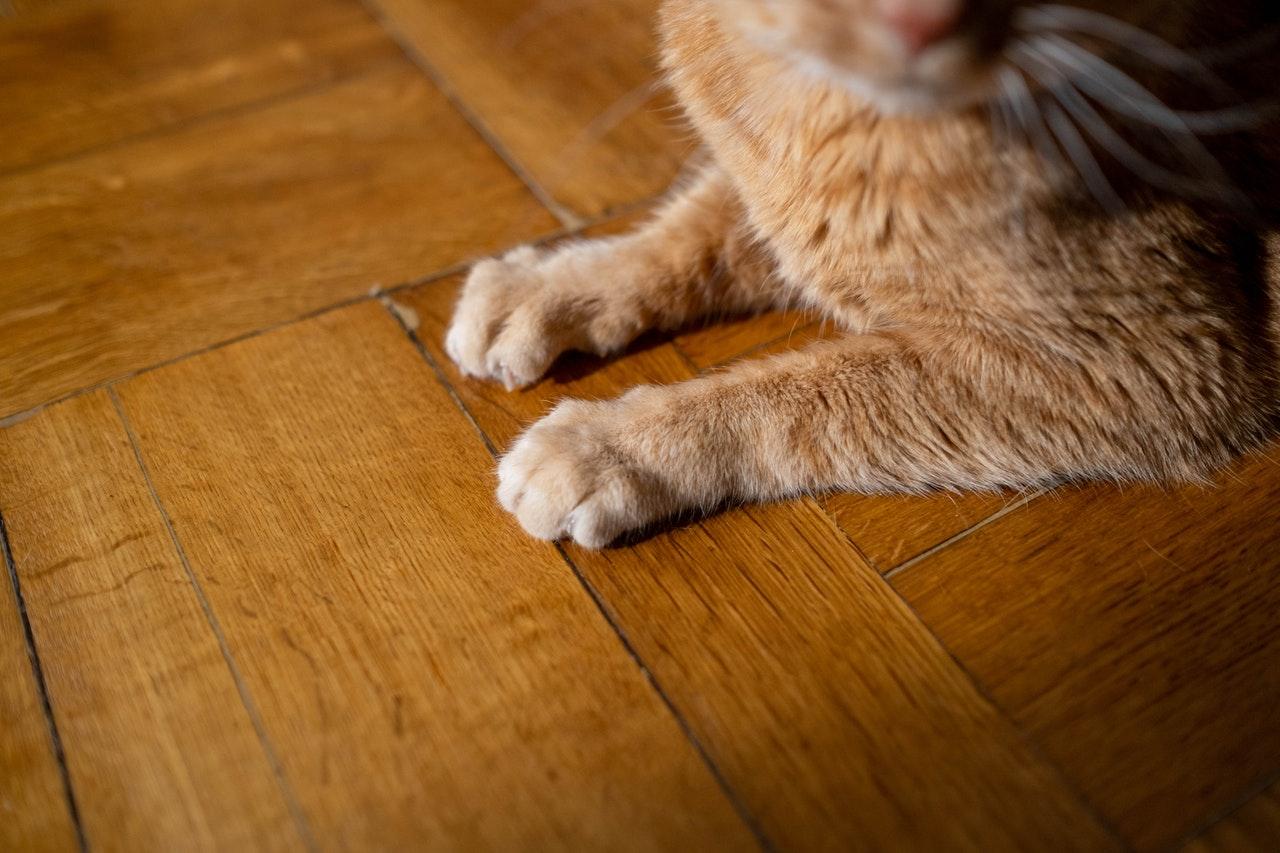 Lantai Kayu Murah Untuk Usaha Cat Cafe yang Gemesin!